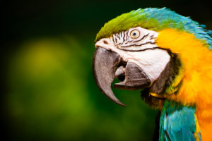 macaw-HDR-sm
